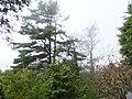 Yunwu Trail 雲霧步道 - panoramio.jpg