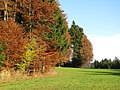 Zeller Wald-GO13.jpg