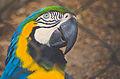 Zoológico Rio - Arara.jpg