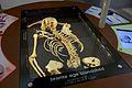 'Younger' Tormarton skeleton, Bristol City Museum and Art Gallery.jpg