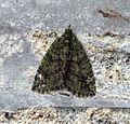 (1760) Red-green Carpet (Chloroclysta siterata) (8166214968).jpg