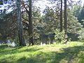 Älvleden Avesta 2008 - panoramio.jpg