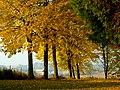Žltá alej - panoramio.jpg