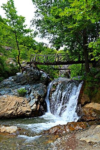 Mount Paiko - Platanus forest