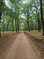 Δασικός δρόμος στο δρυοδάσος Φολόης.jpg