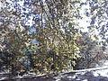 Κατηχώρι - panoramio (2).jpg