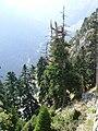 Στις γύρω από την λίμνη Πλαστήρα πλαγιές.jpg