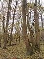 Балабана - есен 3.jpg