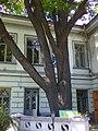 Будинок вчених 1 3.jpg