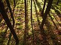 Волшебный лес.jpg