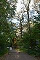 Група вікових дерев дуба DSC 0670.jpg