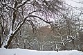 Зима у парку Заріччя у Хмельницькому. Фото 15.jpg