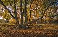 Зуївська осінь.jpg