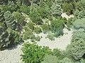 Кедры и сосны на берегу высохшего ручья. г. Тахталы. Кемер. Турция. Июнь 2012 - panoramio.jpg