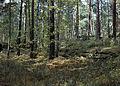Лесные ресурсы.jpg