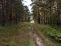 Московская обл, ОрехоЗуевский р-н, пл.95 км -Куровское - panoramio (1).jpg