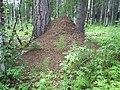 Муравейник - panoramio (1).jpg