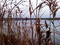 Осень на озере Светлое.JPG