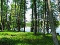 Парк возле усадьбы muižas parks (5) - panoramio.jpg