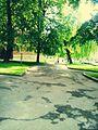 Парк у Дрогобичі. Park in Drohobych.jpg