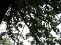 Парк шума Гази Баба во мај (115).JPG