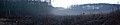 Ранковий туман у біля болота в Чорноліському ландшафтному заказнику.jpg