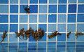 Тритон обыкновенный - Lissotriton vulgaris - Smooth newt - Малкият гребенест тритон (Обикновен тритон) - Teichmolch (21848933891).jpg