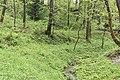 Трускавецький парк 7.jpg