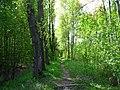 У платформы Красные зори, дорога к лесопарку.jpg