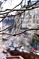 Через гілки дерева з Хрещатого парку.JPG