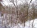 Чернечий ліс 32.jpg