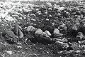"""אבן יצחק - עלית קבוצת """"הגרעין"""" על אדמות חובייזה-JNF025828.jpeg"""