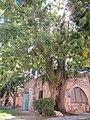 בית האבן הקטן בחצר בית פישר 7.10.2013.JPG