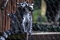 حیوانات باغ وحش مرکزی شهر تفلیس پایتخت گرجستان 01.jpg