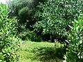 غابة في حوش المخفي.jpg