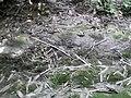 রাইচরন বাউলের মাতা-পিতা এবং দাদা দিদির সমাধি.jpg