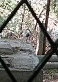 வெள்ளை நெஞ்சு நீர்க்கோழி.jpg