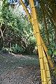 น้ำตกศรีดิษฐ์ Sri Dit waterfall - panoramio - Thaweesak Churasri (35).jpg