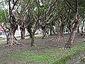 南港公園 Nangang Park - panoramio (8).jpg