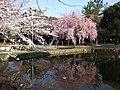 子供の遊ぶ櫻遊園地 - panoramio.jpg