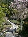 桜(御堂中) - panoramio - 浅野ます道.jpg