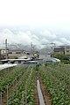 畑、住宅、山と雲 - panoramio.jpg