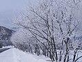 白の並木(White trees) - panoramio.jpg