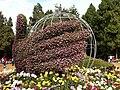 菊展 - panoramio.jpg