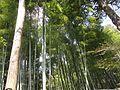 銀閣寺 - panoramio (16).jpg