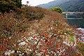 錦川 Nishiki River - panoramio (1).jpg