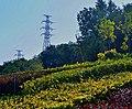 雅玛里克山植被2.jpg