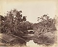 -Botanical Gardens, Calcutta- MET DP147449.jpg
