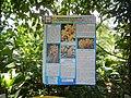 05704jfMidyear Orchid Plants Shows Quezon Cityfvf 38.JPG