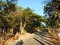 0581jfLandscapes Mabalas Diliman Salapungan Paddy fields San Rafael Bulacan Roadsfvf 07.JPG